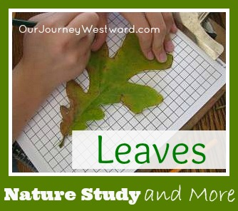 Nature Study and More with Leaves | Our Journey Westward