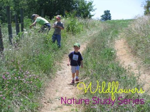 Nature Study: Wildflowers