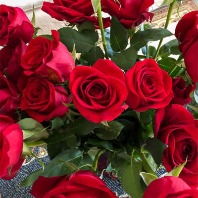 Red Rose Garden