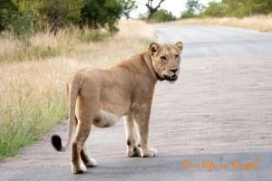 Our Kruger lock-down roadtrip