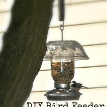 DIY Bird Feeder