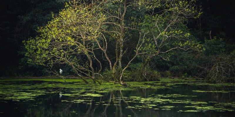 【宜蘭.員山】福山植物園生態之旅!尋找野生動植物、感受大自然氣息