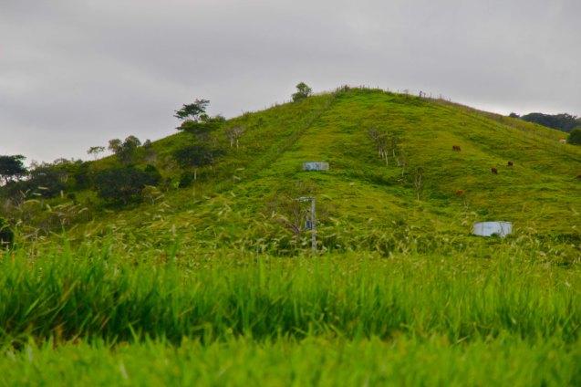 Les colines abreuvoire à vache