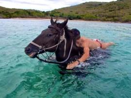Nage avec les chevaux