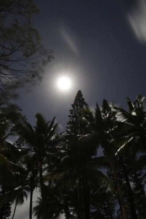 Lune, cocotiers et pins colonnaires