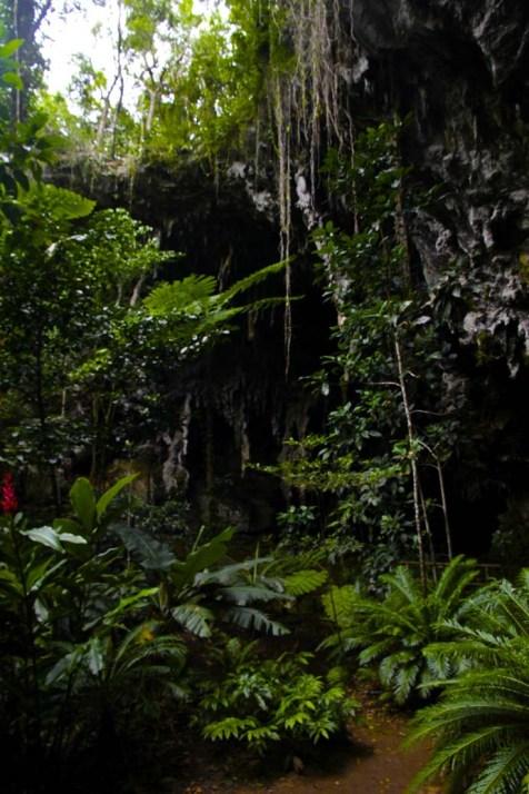 La végétation luxuriante alentour dissimule l'entrée de la grotte.