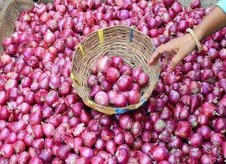 onions price