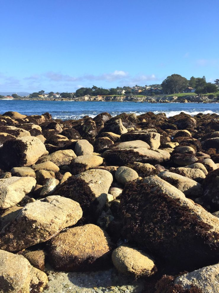 What to see and do in Monterey & Carmel for relaxing seaside weekend with family // Travel with Kids | Family Vacation | California Road Trip