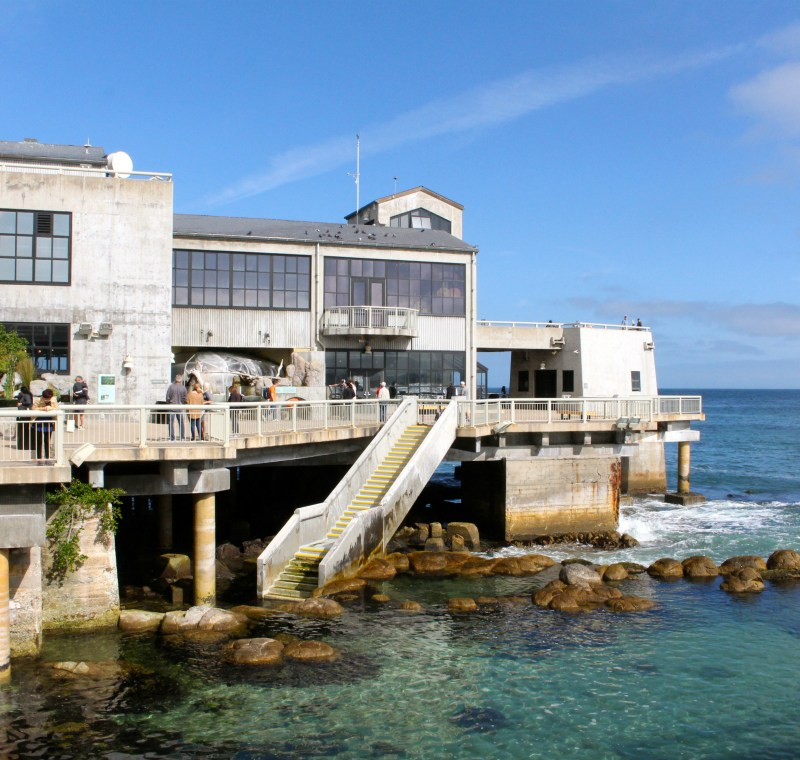 Discovering the Sea at the {Monterey Bay Aquarium}: an inside look at the aquarium's best exhibits | ournextadventure.co