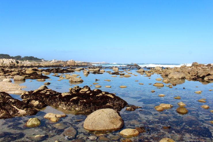 A Family Weekend in {Monterey & Carmel}: 3 days exploring the Monterey Bay Aquarium, Pacific Grove's beautiful beaches, and the quaint town of Carmel-by-the-Sea | ournextadventure.co