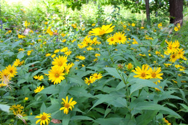 Frolicking in the Fontenelle Forest: a hidden gem in Omaha's own backyard // Family Travel   Travel with Kids   Midwest Travel   Nature Center   Omaha Day Trip   Nebraska   Hiking   Outdoors