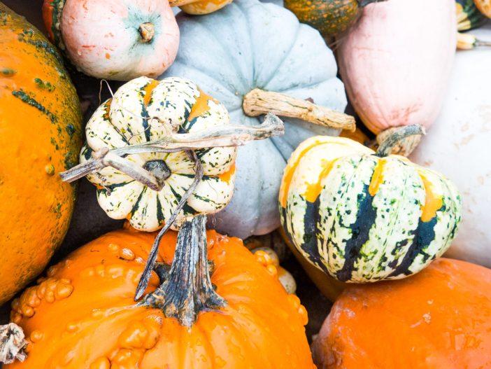 Thanksgiving Thankfulness | ournextadventure.co