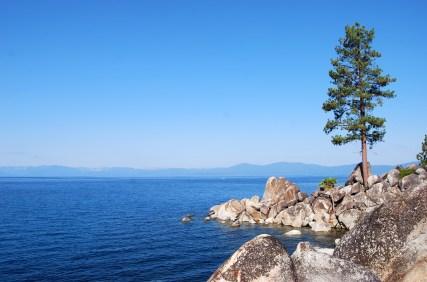 LakeTahoe-Tree