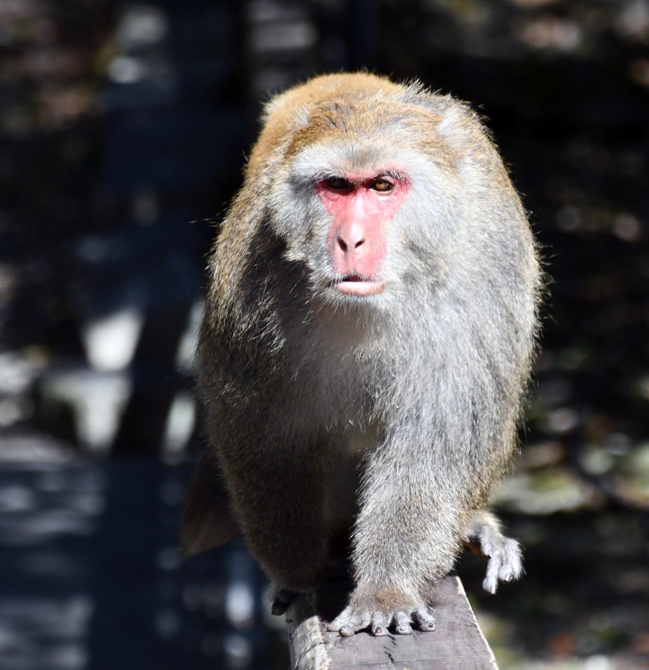 Monkey-Railing