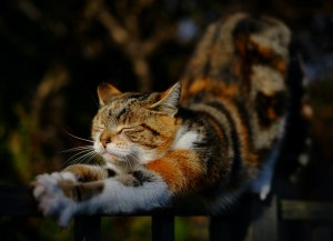 """Hello Sun"" - [Calico cat stretching]"