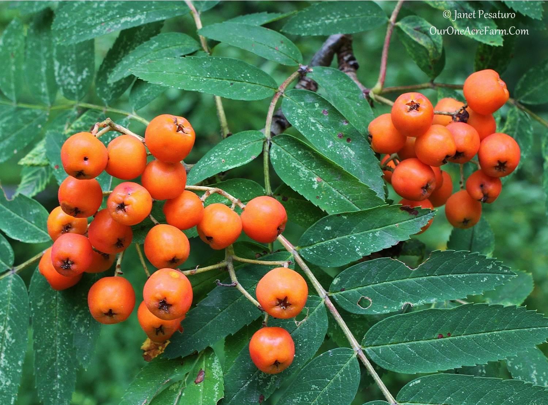 Animals Eat Tree Dogwood What Plant