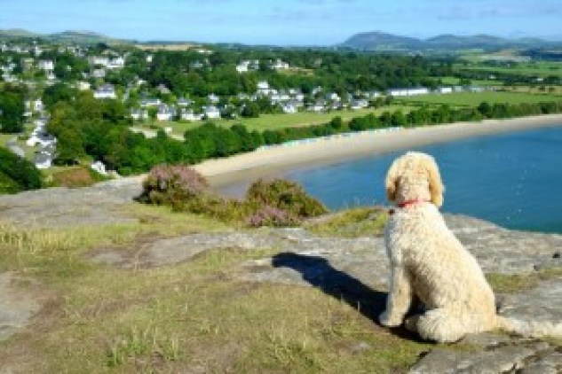 Furry-friends-welcome-Bob-the-dog-enjoying-the-view-from-Llanbedrog-headland-Abersoch-Daydreams-300x200