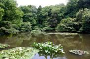 Meiji Shrine - Tokyo10