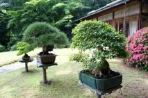 Meiji Shrine - Tokyo14