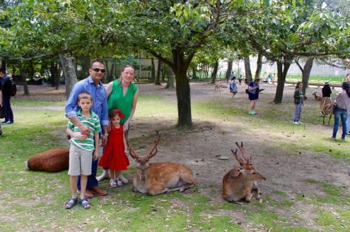 Nara Park19