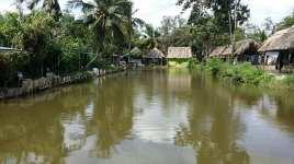 Thai Village14