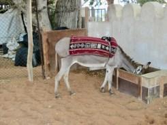 ABU DHABI HERITAGE VILLAGE21
