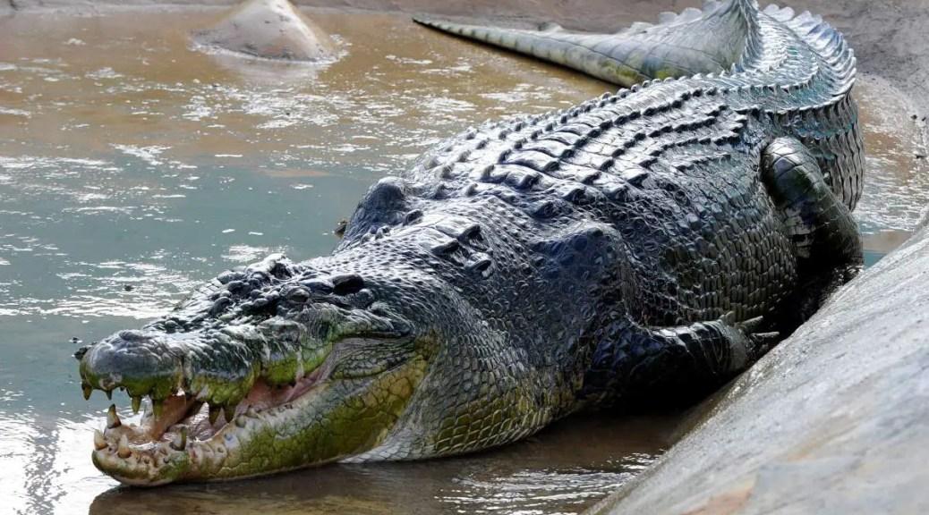 Lolong (crocodile)