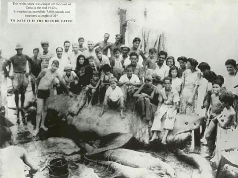 The Cuba Great White Shark (1945)