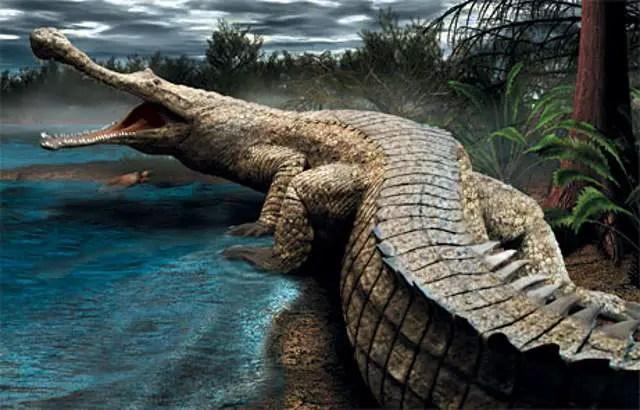 Rhamphosuchus