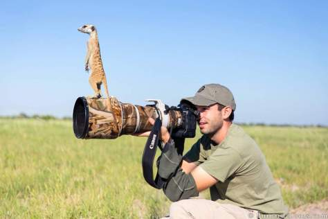 A meerkat and photographer