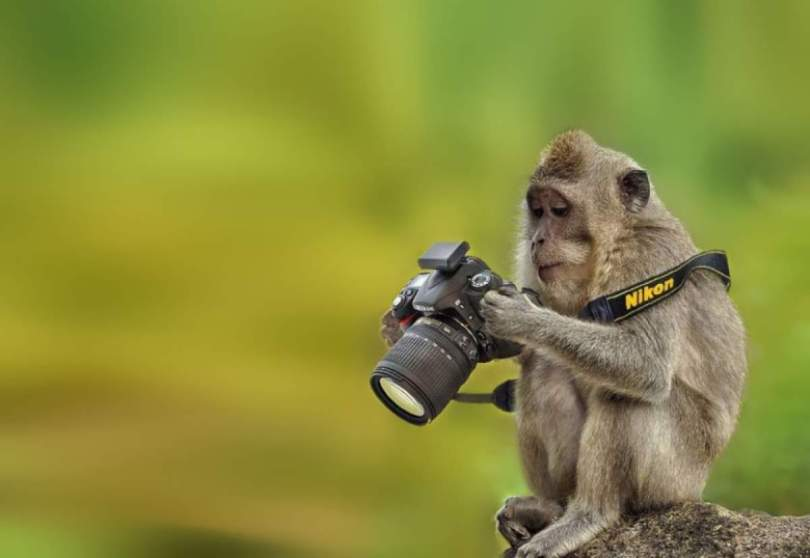 A monkey and a camera