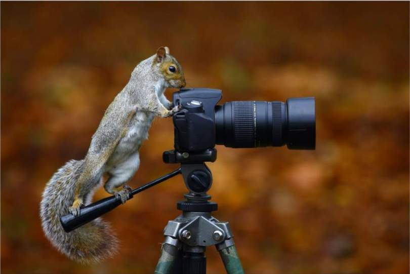 A squirrel trying to be a photographer.