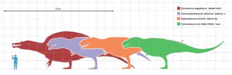 Largest theropods