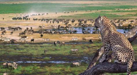 Earth without humans, wildlife
