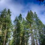 We emit so much CO2 into the Earth's atmosphere that only planting trees is not enough