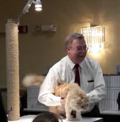 Blonde cat being held