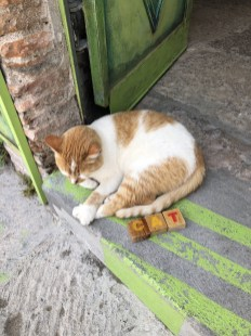 even the cats are relaxed in San Miguel de Allende