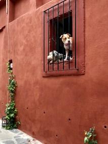 It's a dogs life in San Miguel de Allende