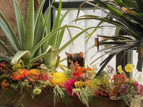 A cat amongst the flowers