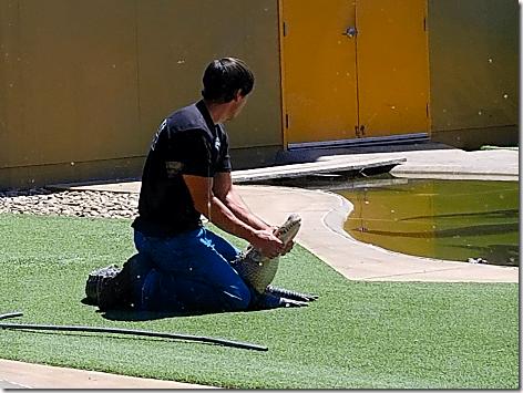 Reptile Gardens Alligator Show 3