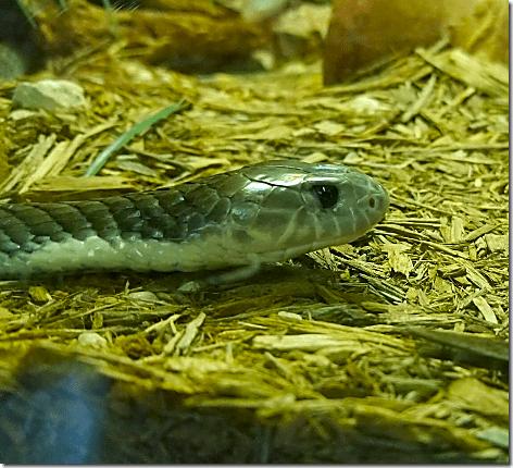 Reptile Gardens Snake 3