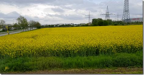 Regensburg Mustard