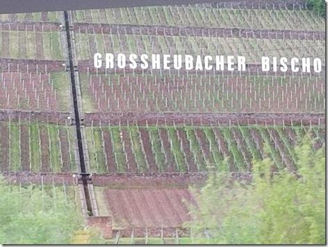 Wertheim Vertical Vineyards