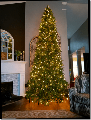 Brandi 2019 Big Christmas Tree