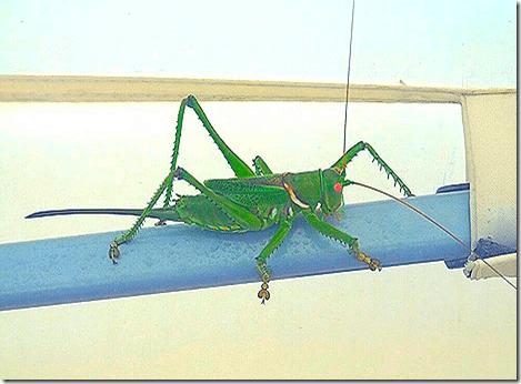 Gate Guarding Grasshopper