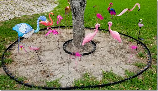 Flamingo Flamboyance 2