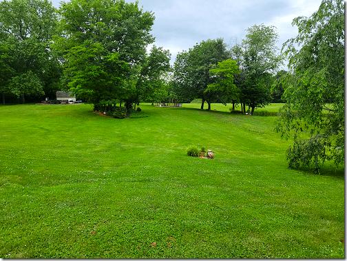 Debbie's Backyard