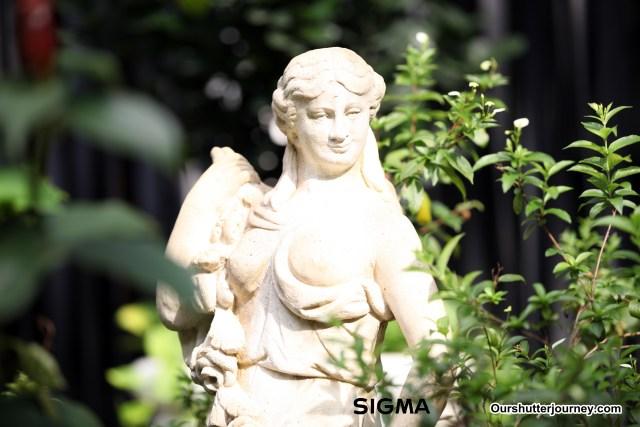 IMG_5063Sigma