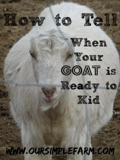 How to Tell When a Goat is Ready to Kid