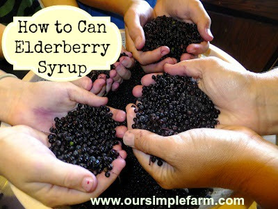 How to Can Elderberry Syrup